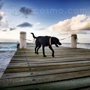 dog on pier