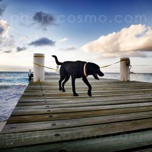 dog on pier